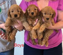 Bailey Boys pic 2 10-9