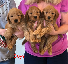 Bailey Boys pic 4 10-9
