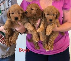Bailey Boys 10-9