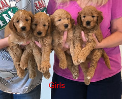 Bailey Girls pic 2 10-9