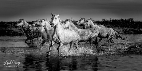 """Breaking Away from the Herd • <a style=""""font-size:0.8em;"""" href=""""http://www.flickr.com/photos/106269596@N05/50448111958/"""" target=""""_blank"""">View on Flickr</a>"""