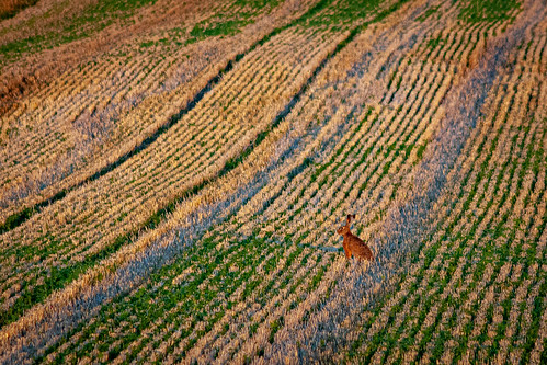 Lines and a Hare