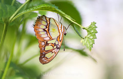Photo of Butterfly (75)