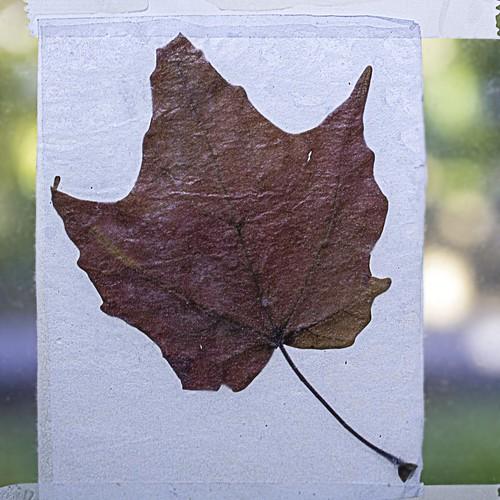 Fallen Leaf Window Decoration