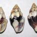 Anachis rugosa (rough dove snail shells) (Panama) 4
