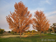 October 3, 2020 - Fall scenes in Thornton. (LE Worley)