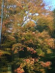 Window reflection of leaves turning