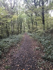 Photo of Footpath through woods