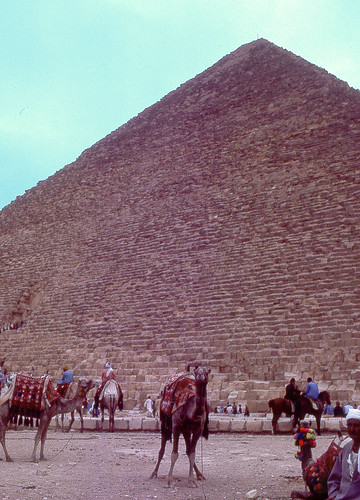 Camels and the Great Pyramid, Egypt