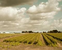 Minimal landscapes Limburg