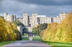 Photo of Windsor Great Park 15 October 2020 014b