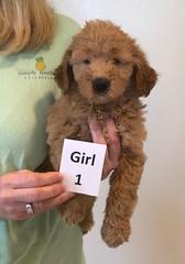 Bailey Girl 1 pic 2 10-16
