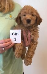 Bailey Girl 1 10-16