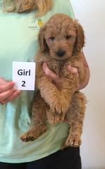 Bailey Girl 2 10-16