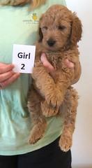 Bailey Girl 2 pic 3 10-16