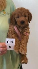 Bailey Girl 4 pic 4 10-16