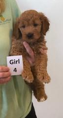 Bailey Girl 4 pic 2 10-16