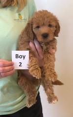 Bailey Boy 2 pic 3 10-16