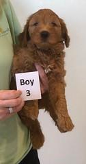 Bailey Boy 3 10-16