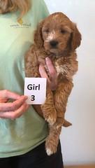 Bailey Girl 3 10-16