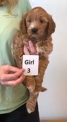 Bailey Girl 3 pic 2 10-16