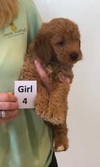 Bailey Girl 4 pic 3 10-16