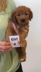 Bailey Girl 4 10-16