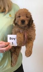 Bailey Boy 1 pic 4 10-16