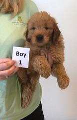 Bailey Boy 1 10-16
