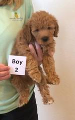 Bailey Boy 2 pic 2 10-16