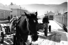 A horse cart somewhere in Romania