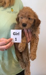 Bailey Girl 1 pic 3 10-16