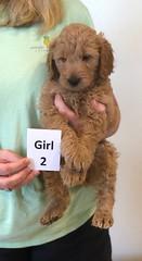 Bailey Girl 2 pic 2 10-16