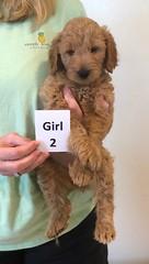 Bailey Girl 2 pic 4 10-16