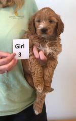 Bailey Girl 3 pic 3 10-16