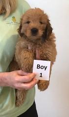 Bailey Boy 1 pic 2 10-16