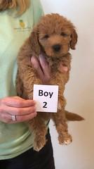 Bailey Boy 2 10-16