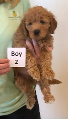 Bailey Boy 2 pic 4 10-16