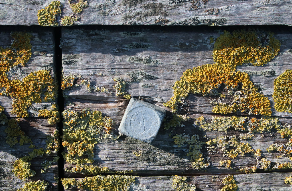 Lichen on sea defences at East Beach, Selsey. West Sussex, UK
