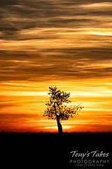 October 17, 2020 - Solo tree sunrise. (Tony's Takes)
