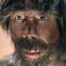 Portrait of a homo erectus wax figure model in a museum