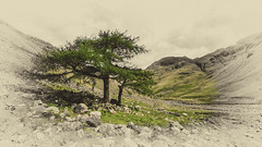 Photo of Tree in Wasdale
