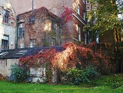 Photo of Autumn colours #3