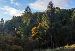 Photo of Trees , Sunrise Light, Lochwinnoch, Renfrewshire, Scotland, UK