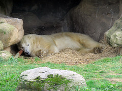 Photo of Polar Bears - Yorkshire Wildlife Park, October 2020