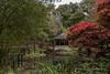 BRYNGARW HOUSE, JAPANESE GARDEN.