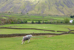 Photo of Wasdale Head, Lake District, England