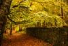 Autumn Colour in Raith Estate, Kirkcaldy