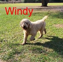 windy_49782574186_o