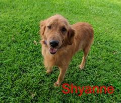 shyanne_29977314727_o